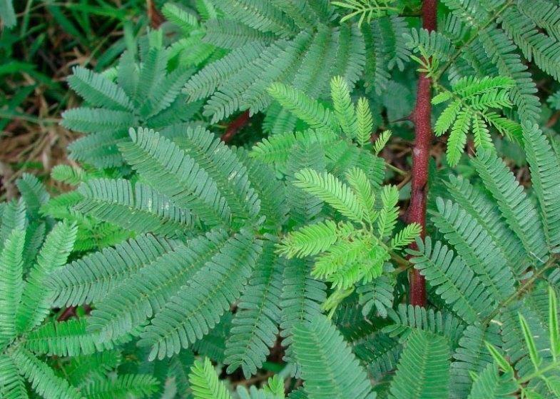 Arborele pielii